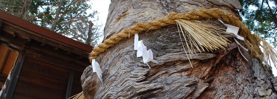 拗の木 | 飛騨一宮水無神社